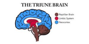 brain IFI